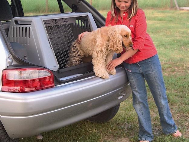 trasportare cane in auto